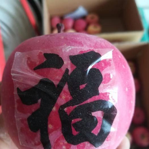 甘肅省平涼市莊浪縣首紅蘋果 80mm以上 片紅 紙+膜袋