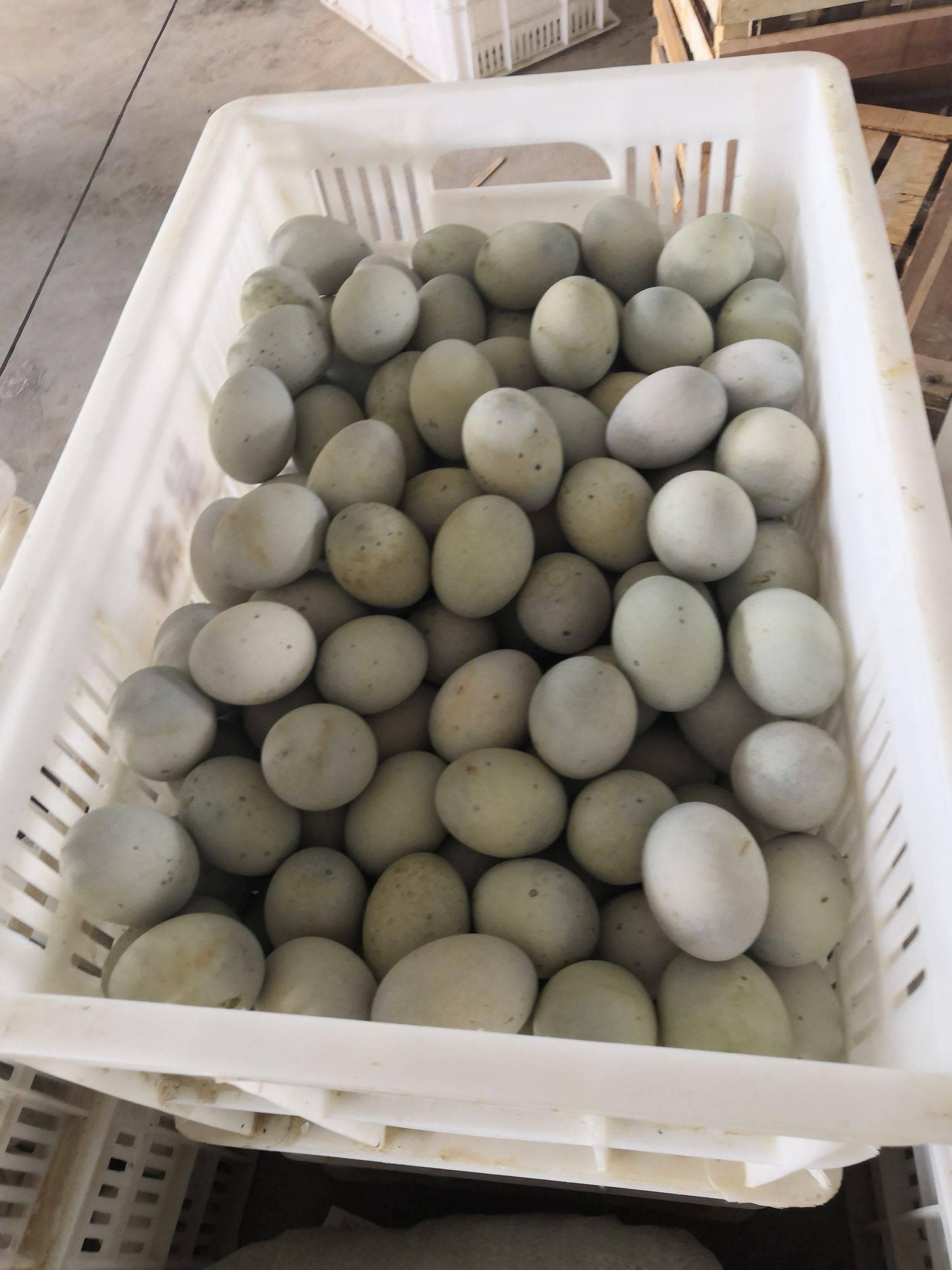 [松花鸭蛋批发]松花鸭蛋 微山湖松花蛋 不一样的味道价格7.5元/斤