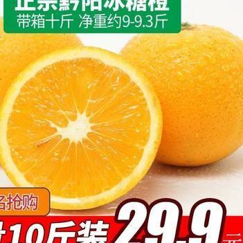 黔陽冰糖橙  一件代發  歡迎各大電商平臺合作