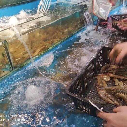 重庆市渝北区 泰国基围虾(个头超大)