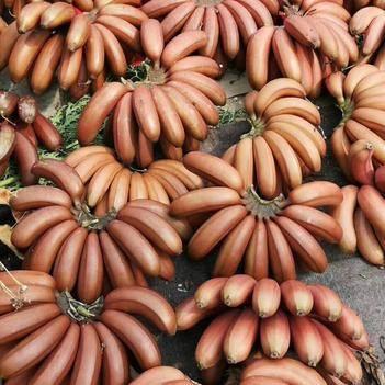 紅美人香蕉 九斤裝包郵 Q彈軟糯香甜 基地直達 一手貨源