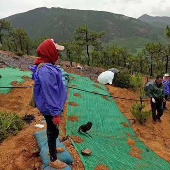 自然災害防治 水土流失抗沖植生毯