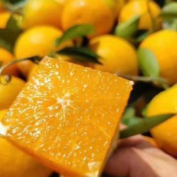 四川晚熟夏橙五斤九斤宝宝果最低18.8包邮包售后