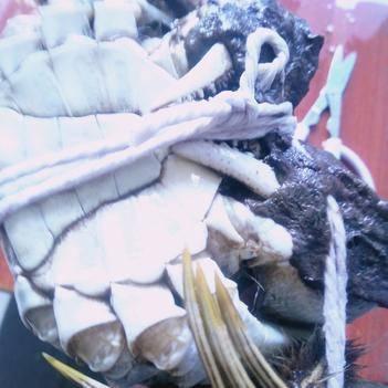 阳澄湖大闸蟹公2.5两一母1.5两,可单选全公或全母