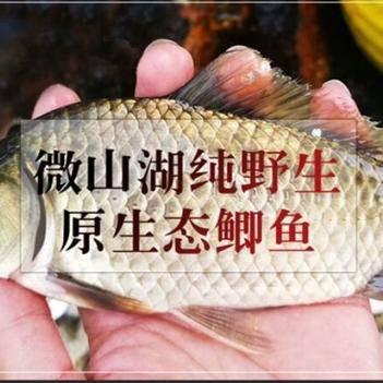 微山湖野生鲫鱼新鲜活鱼现杀孕妇月子煲汤营养滋儿童大补熬汤