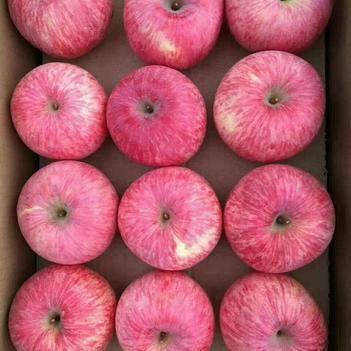 洛川蘋果 秒殺陜西洛川紅富士脆甜一件代發包郵,大量有貨對接各大平臺