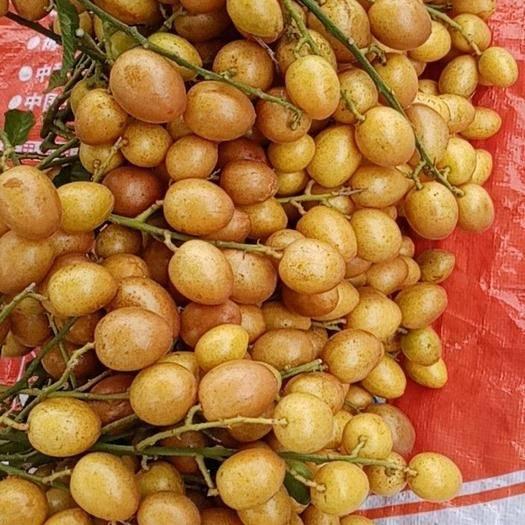 廣西壯族自治區欽州市靈山縣雞心黃皮 黑黃皮,味帶點甜酸。非常好吃