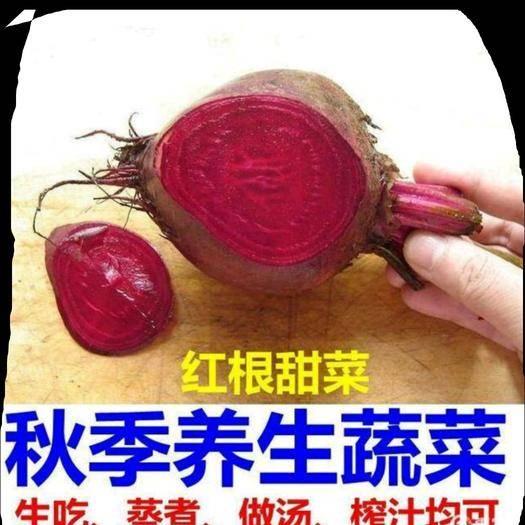 河北省唐山市遷安市甜菜根 紅菜根養生菜水果菜5斤一箱包郵
