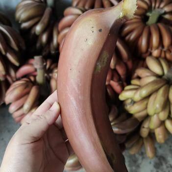 福建土樓紅香蕉,電商,微商一件代發