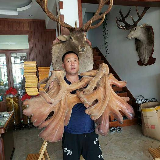 吉林省延邊朝鮮族自治州敦化市鹿角 鹿茸