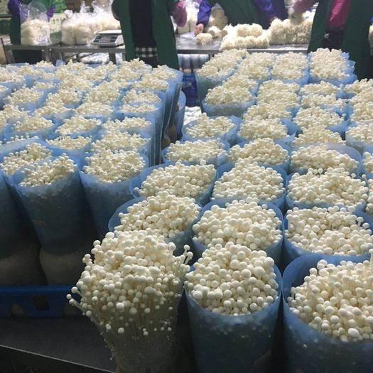 广东省佛山市三水区 大量供应金针菇,白玉菇,杏鲍菇。