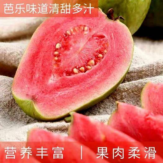 福建省漳州市长泰县红心芭乐 果园现摘