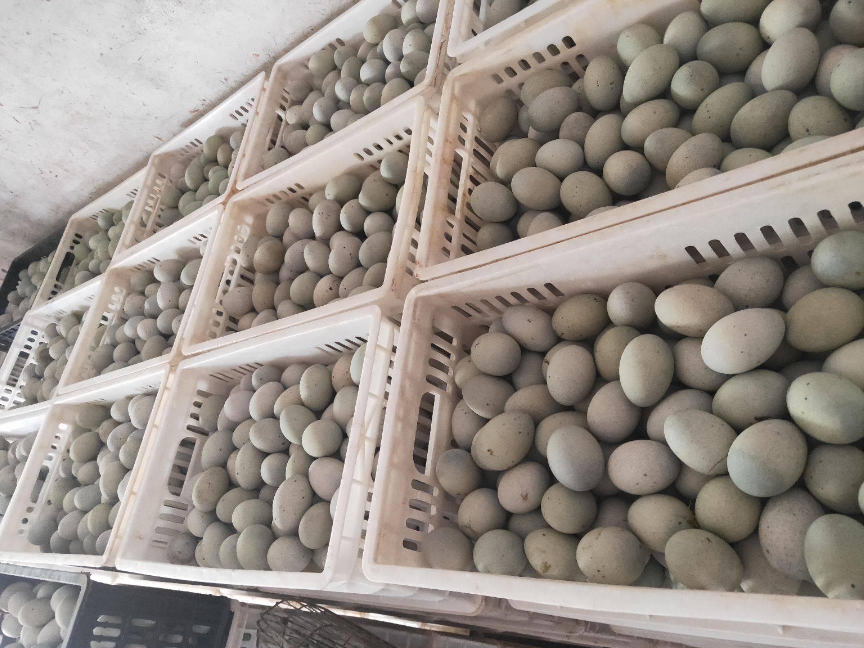 [松花皮蛋批发] 出售沙心松花皮蛋松花鸭皮蛋价格6.2元/斤