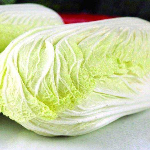 河北省张家口市尚义县 张家口,大白菜~玲珑黄 橄榄菜~有机菜花~莴笋种植基地