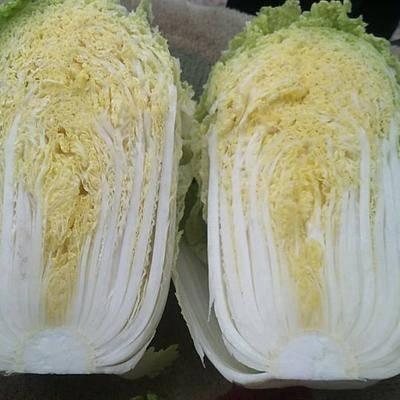 河北省張家口市尚義縣玲瓏黃白菜 3~6斤 毛菜