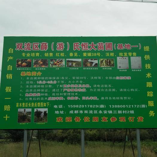 四川省成都市雙流縣愛媛38號柑桔苗 雙流區薛氏恒大苗圃,都是精品樹苗,大貨。品種多。代開檢預證