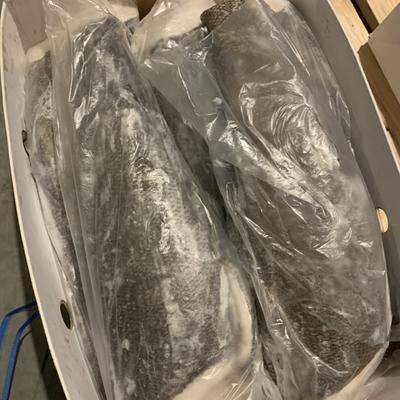上海黃浦區冷凍海魚 銀雪魚