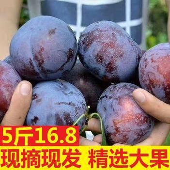 3斤9.9嘗鮮裝包郵黑布林李子現貨新鮮上市
