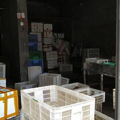湖北省武漢市江漢區清水小龍蝦 原產地精品蝦