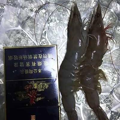 山東省東營市墾利縣 鮮活南美白對蝦上市了!物美價廉,歡迎采購!
