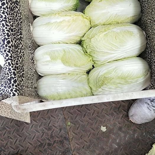 河北省邯郸市永年县 大白菜 大量供应