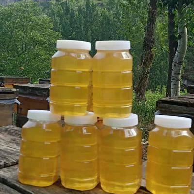 湖南省邵陽市隆回縣土蜂蜜 塑料瓶裝 2年以上 100%