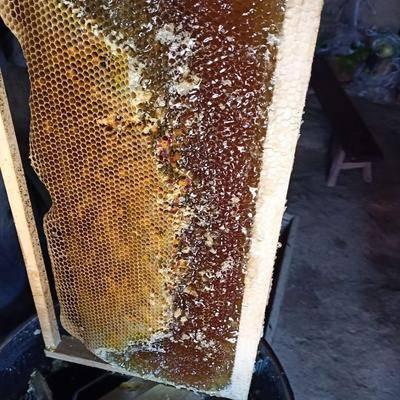 陜西省延安市富縣 土蜂蜜,純花蜜,沒喂養。假一賠十。