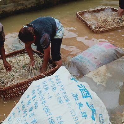 貴州省安順市西秀區 出售折耳根(魚腥草),質量好,