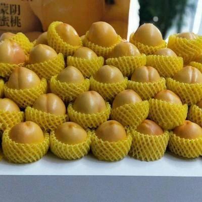 山東省臨沂市蒙陰縣 蒙陰脆甜黃油桃