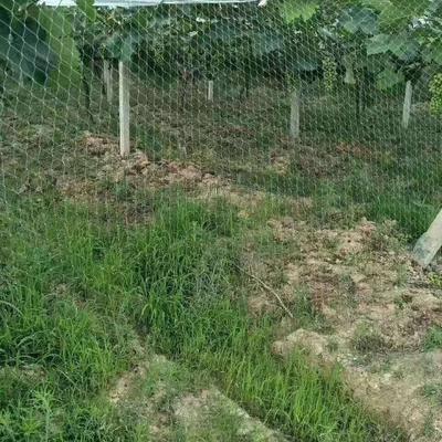 山東省濱州市無棣縣 防鳥網,紗窗網。