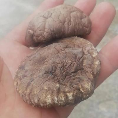 河北省滄州市運河區 脫水香菇,4~5倍泡發率,無硫熏,山珍之王,全國常年供貨。