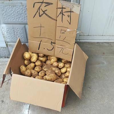 遼寧省大連市普蘭店市 農村自家土豆,純綠色有機食物