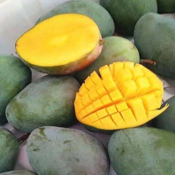 芒果10斤装大果青芒果一件发货包邮价