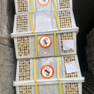 云南省昆明市東川區 泰國龍眼批發 金標紅標藍標都有