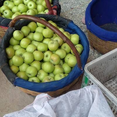 山西省運城市夏縣 維多利亞青葡萄,每串半斤以上