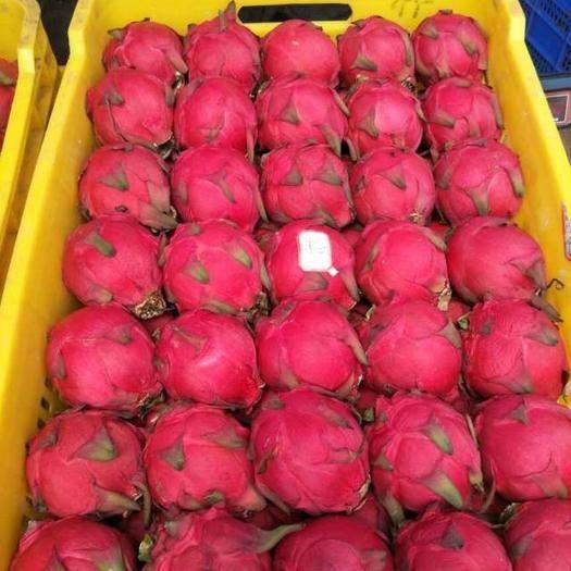 广东省湛江市麻章区 AAA 硇洲火龙果品种齐全