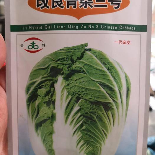 河南省商丘市夏邑縣 改良青雜三號,白菜種子