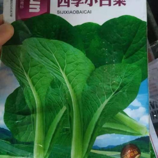 江蘇省宿遷市沭陽縣 白菜種子小白菜種子大白菜種子蘿卜種子