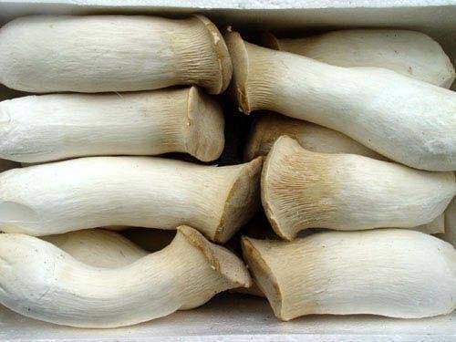江蘇省連云港市灌南縣 工廠生產特一級化杏鮑菇