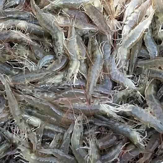 山東省濟寧市微山縣 大量供應南美白對蝦