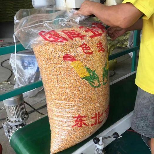 湖北省武漢市洪山區登海605玉米粒 洪山春玉米