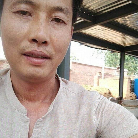 河北省保定市曲陽縣 出售小麥