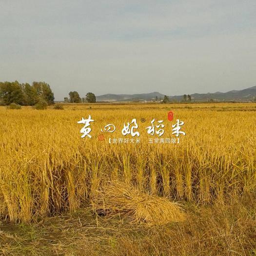 黑龍江省哈爾濱市五常市五常大米 五常市民樂朝鮮族鄉,自家種地,自家銷售絕不摻假