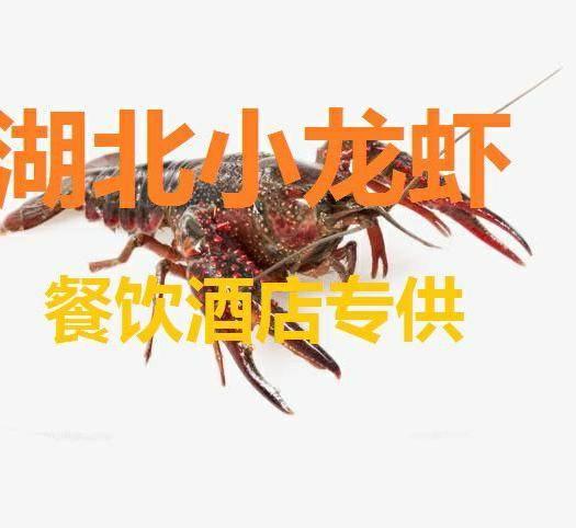 湖北省黃岡市蘄春縣 小龍蝦