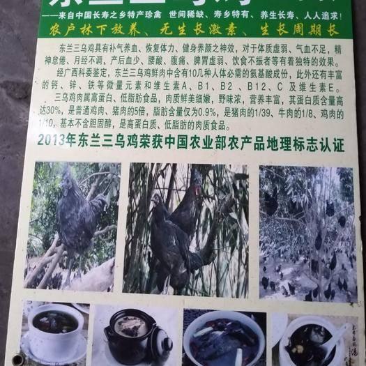 廣西壯族自治區南寧市青秀區東蘭三烏雞 長壽養生保健雞