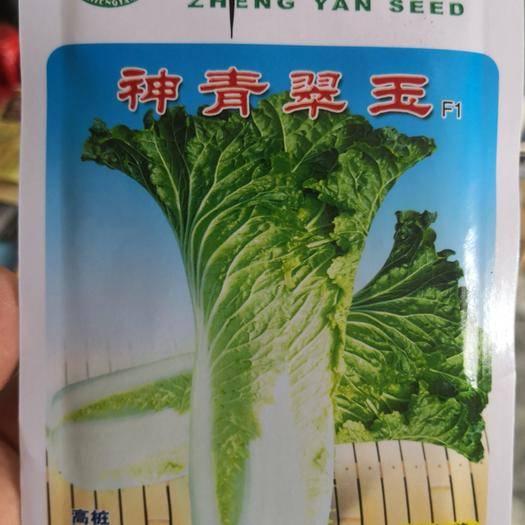 河南省商丘市夏邑縣 高樁,品質佳,抗病性強,神青翠玉,白菜種子20克