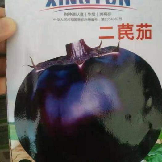 江蘇省宿遷市沭陽縣 蔬菜種子茄子種子絲瓜種子白菜種子蘿卜種子