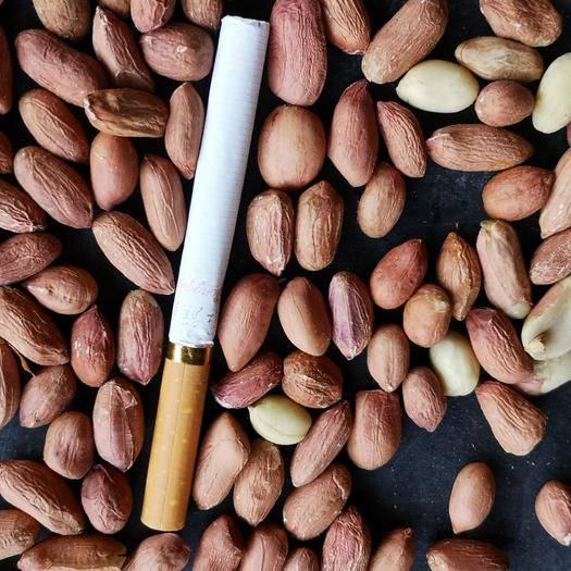 河南省開封市蘭考縣花育系列花生 供應磨醬米
