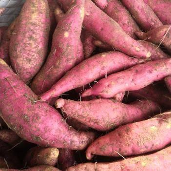 2019漳浦六鰲紅薯 2.5兩到1斤   凈重5斤裝包郵