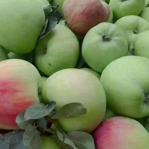 山東省臨沂市沂水縣 美八蘋果大量上市